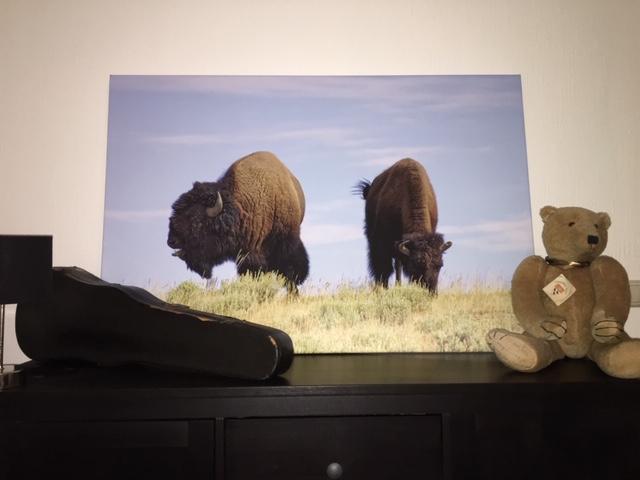 2 bizons