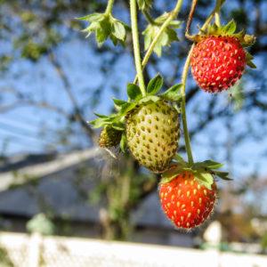 seizoensgroenten en seizoensfruit van september. Smaakvol, gezond, betaalbaar en erg lekker!