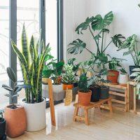 Wat zijn de beste kamerplanten om lucht te zuiveren in je huis? Hier de 5 beste kamerplanten voor een schone lucht in huis.