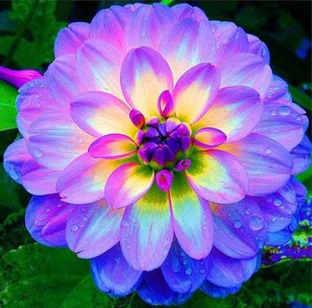 flor linda fotos dicas imagens de flores lindas e maravilhosas