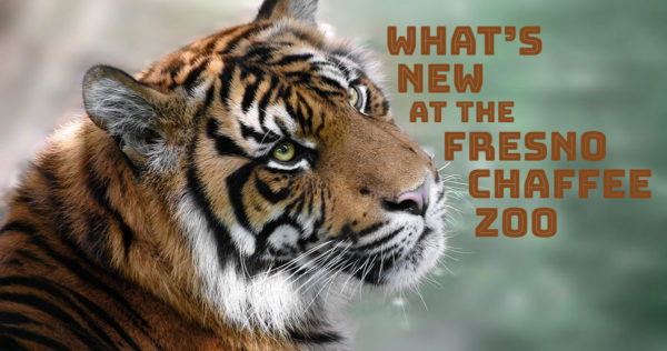 Zoo Lights Fresno Chaffee Zoo