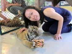 Tiger in Chiangmai.