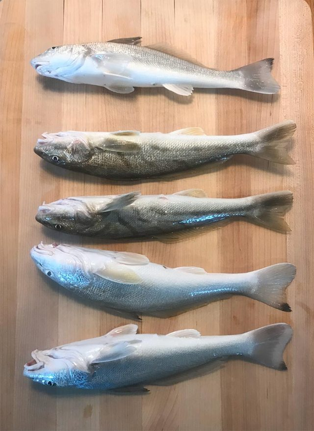 Five Whiting fish on a cutting board