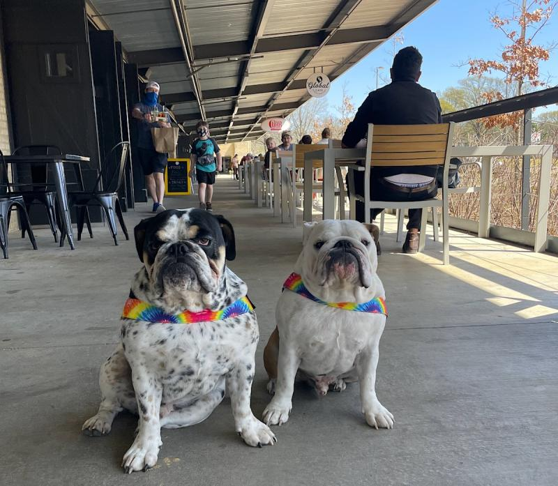 dog friendly patios in memphis