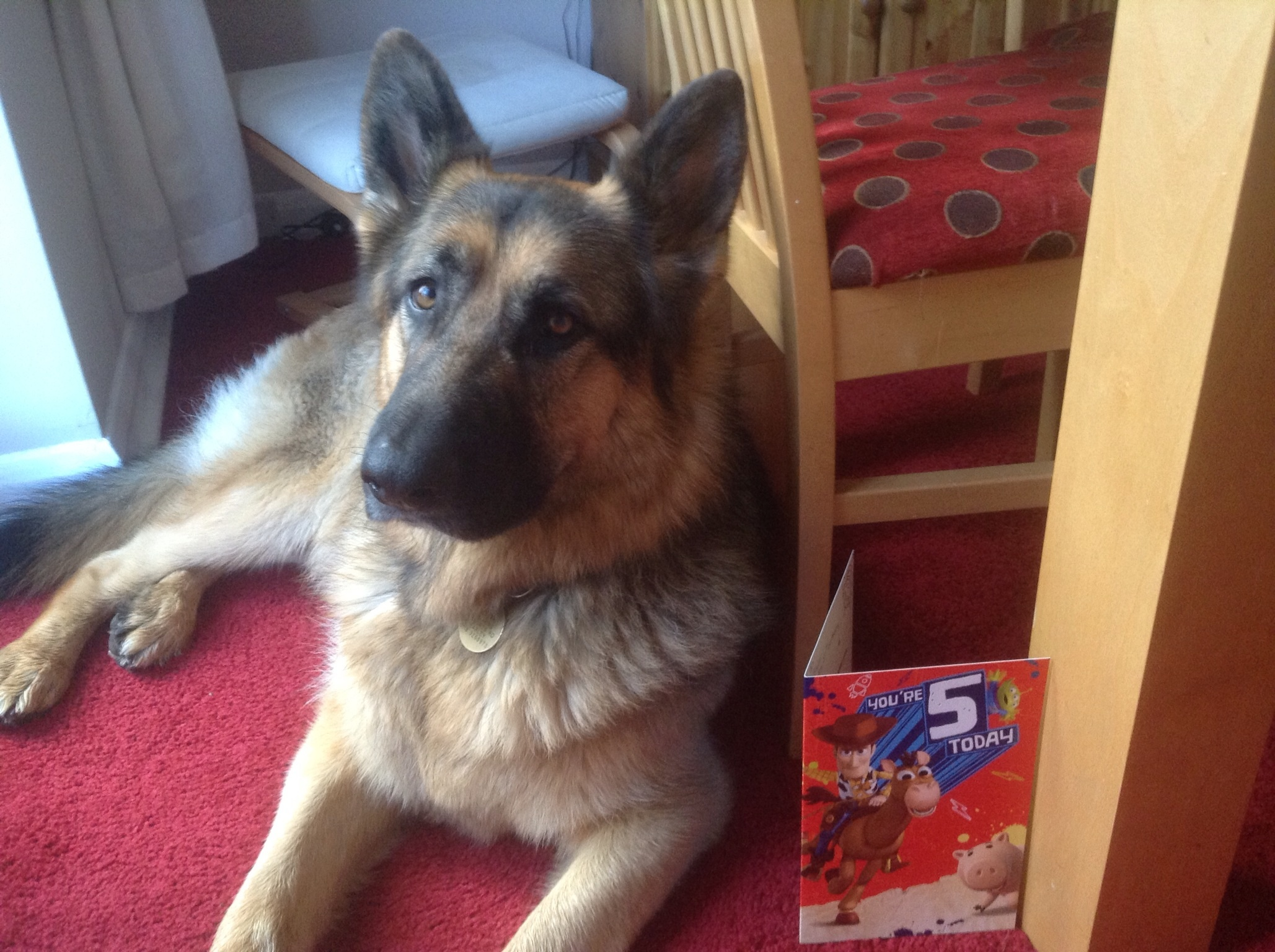 Dog's That Need Space Archives - ILoveMyDogMoreThanMyKids