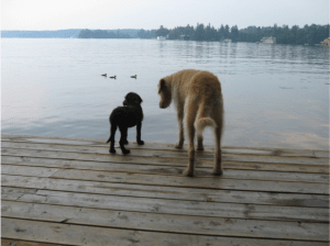Leroy and Ralphie rescue dock