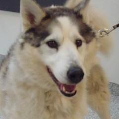 Edie's Ontario SPCA's – Pet of the Week