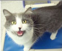 Edie's – Ontario SPCA Pet of the Week