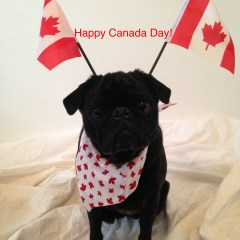 Happy Canada Day!