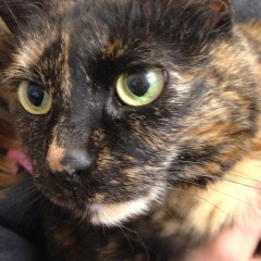 A Cats Journey to Healthiness – This Cat Can Do!