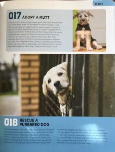Adopting a Mutt or Rescue a Purebred dog?