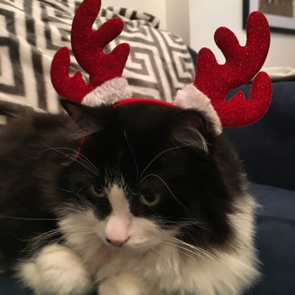 Merry Christmas from Lloyd cat