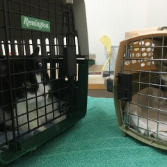 Indoor Cats Need Vet Check-ups Too