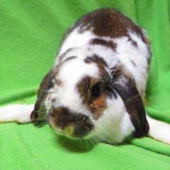 Edie's Adoptable Pet of the Week – Ontario SPCA