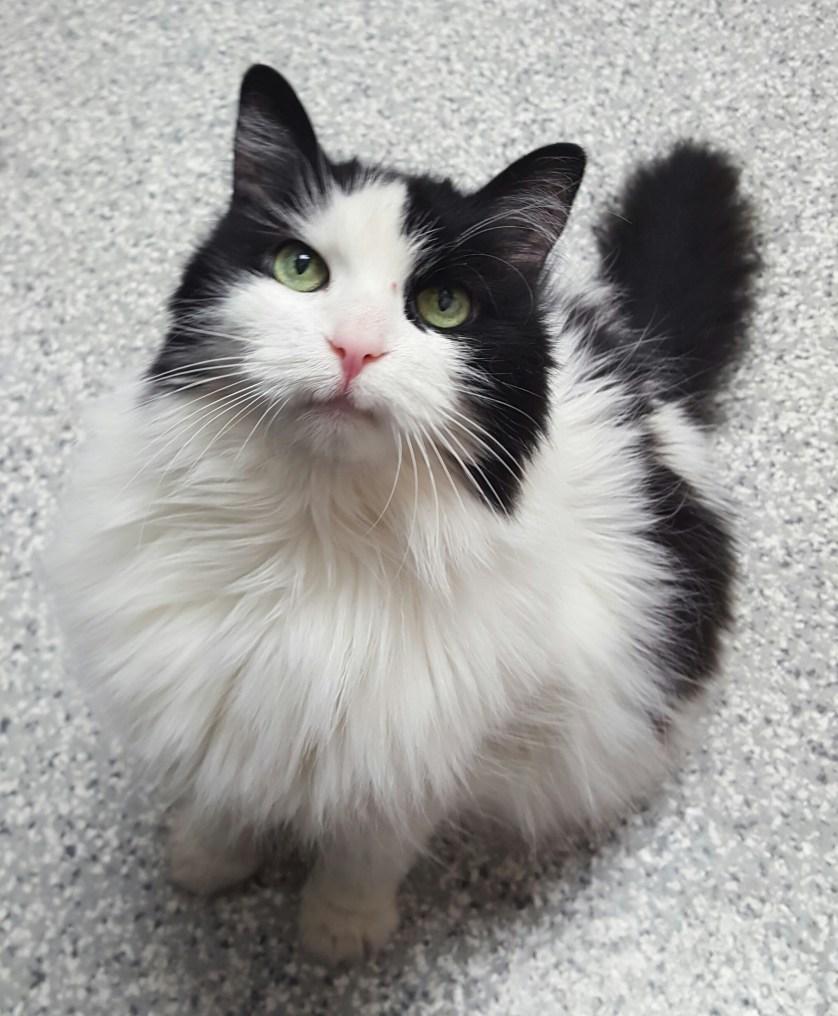 Ontario SPCA Adoptable Pet of the Week