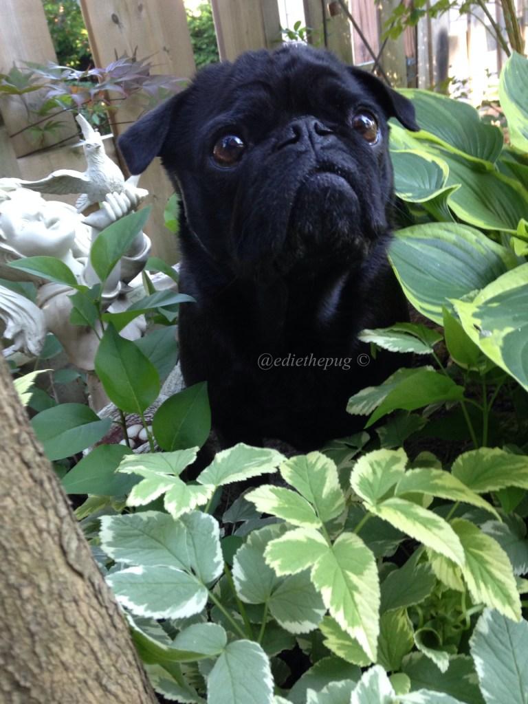 Dog Days of Summer Safety - Pesticides