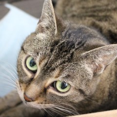Adoptable Cat of the Week – Asia