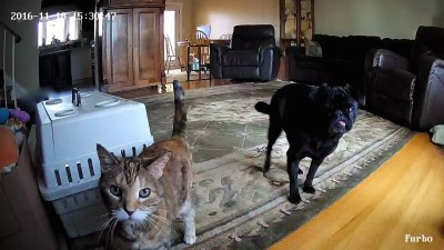 Furbo Treat-Popping Dog Camera Review #sponsored