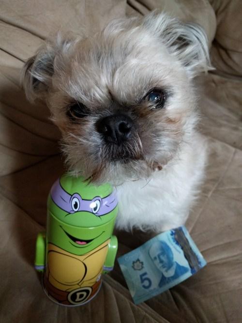 Interviews From Edie's Pug House - Felix the Pugzu
