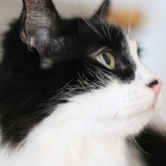5 Things You Should Know Before Getting a Cat