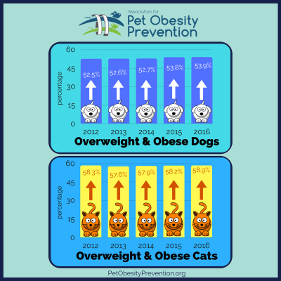 Pet Obesity and Its Challenges
