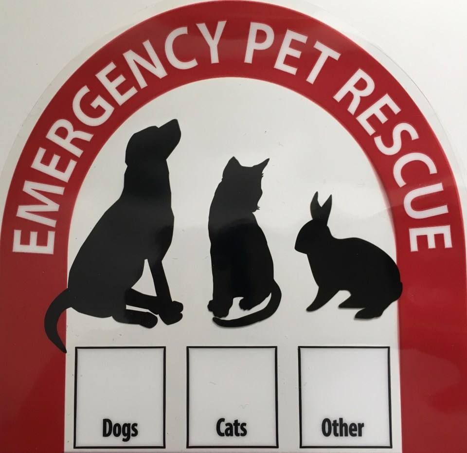 Disaster Preparedness and Your Pets