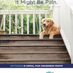 Animal Pain Awareness