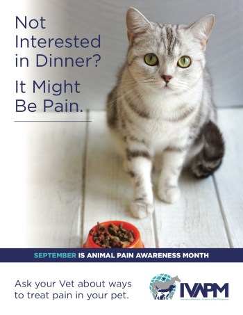 Animal Pain Awareness Month