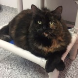 Adoptable Cat of the Week – Widget