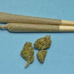 Marijuana and Pet Safety