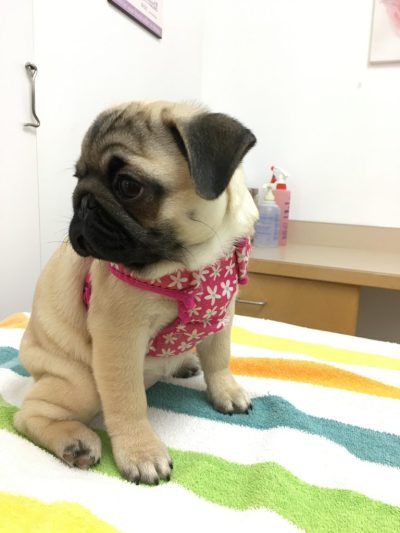 How Much Does a Puppy's First Year Cost?