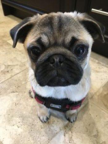 Puppy's First Year - Month 4