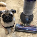 Puppy's First Year – Introducing Puppy to Vacuum