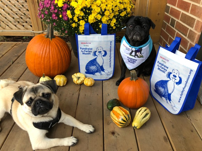 Starting October 1, 2018, the Farley Foundation kicks off its annual fundraising campaign to help those who are struggling financially to pay for veterinary care for their pets.