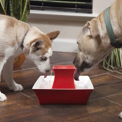 PetSafe Pagoda Pet Fountain Giveaway!