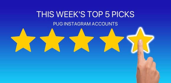 5 Pug Instagram Accounts to Follow