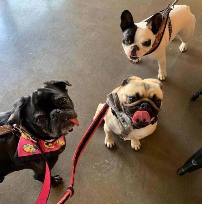 Vet Visit, Toronto Dog Event, Saying Goodbye, End of Summer