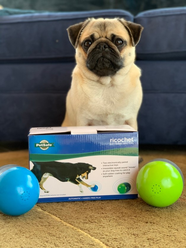 Keeping Pets Fit, Active & Healthy with PetSafe Canada & Giveaway! #ad