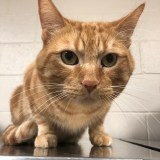 Adoptable Cat of the Week – Murray
