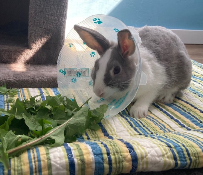 Adoptable Rabbits of the Week -Dexter & Astro