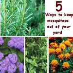 5 Natural Ways to keep mosquitoes out of your yard