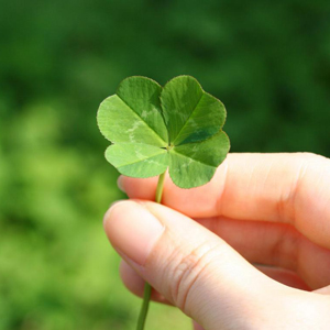 four leaf clover hunt
