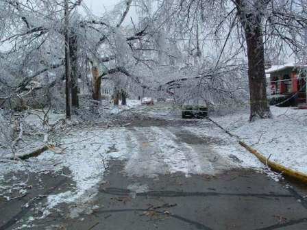 forestry-kentucky-ice-storm