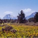 Grand Teton NP wildflowers