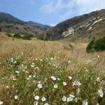 Channel Islands NP Santa Cruz wildflowers