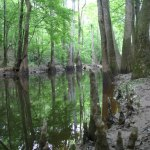 Congaree NP Cedar Creek