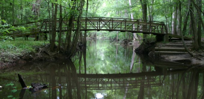 Congaree NP Kingsnake Trail Bridge