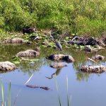 Everglades NP Anhinga Trail
