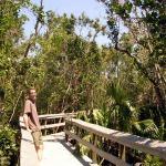 Everglades NP Mahogany Hammock