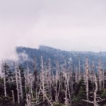 Great Smoky Mountains NP Clingmans Dome